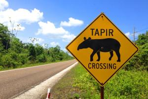 Tapir Crossing